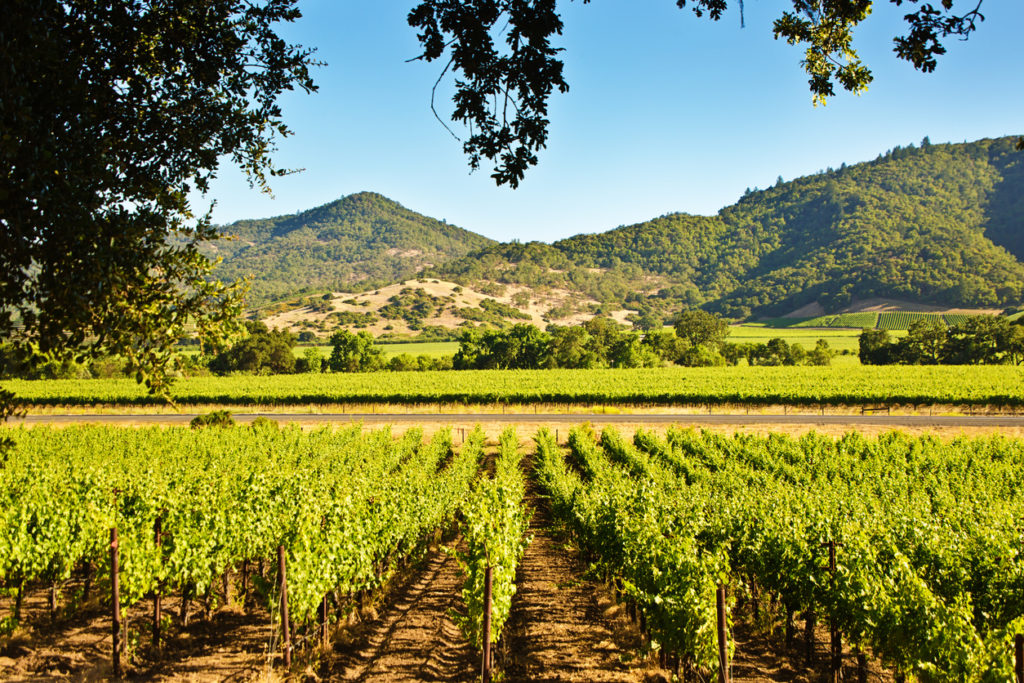 Napa Valley Photo Credit: YinYang (iStock).