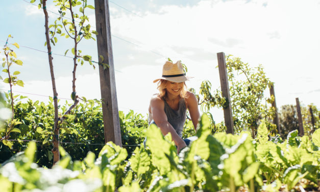 Gardening Tips to Beat the Heat