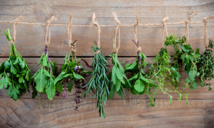 5 Herbs for Boosting Memory and Concentration