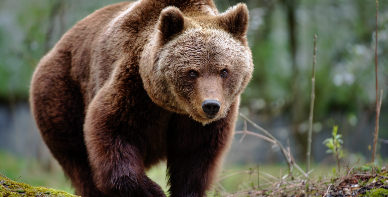 8 Ways to Bear-Proof Your Home