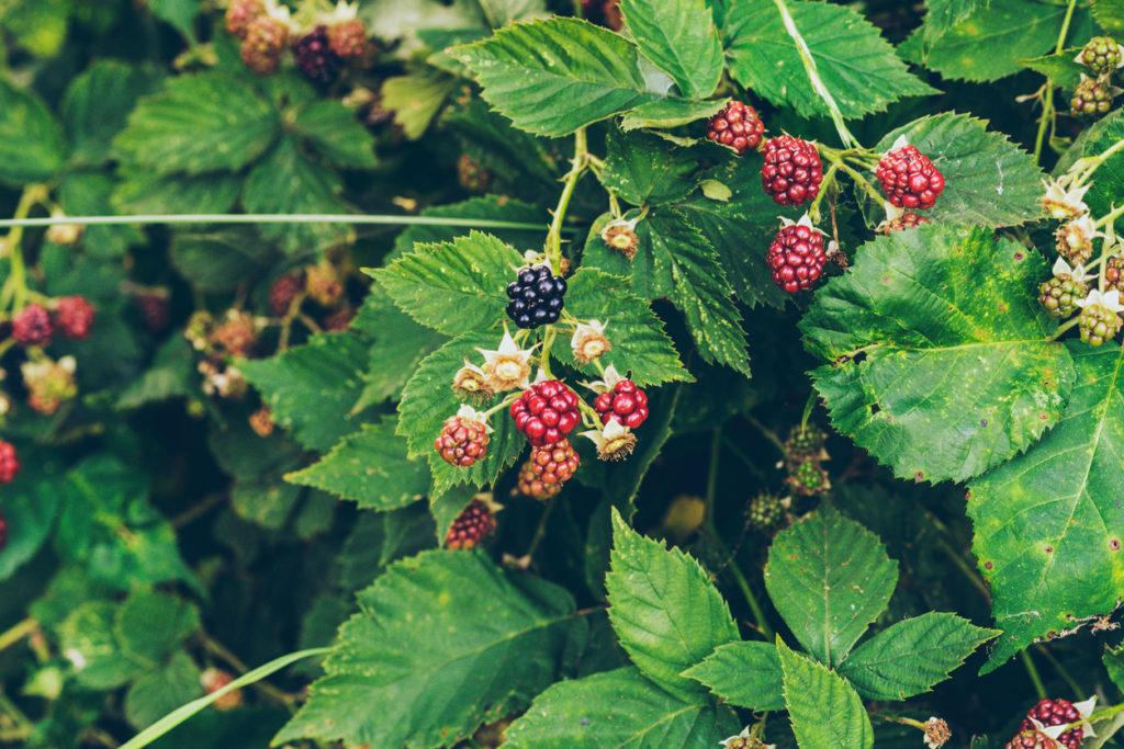 Berries Photo Credit: ysbrandcosijn (iStock).