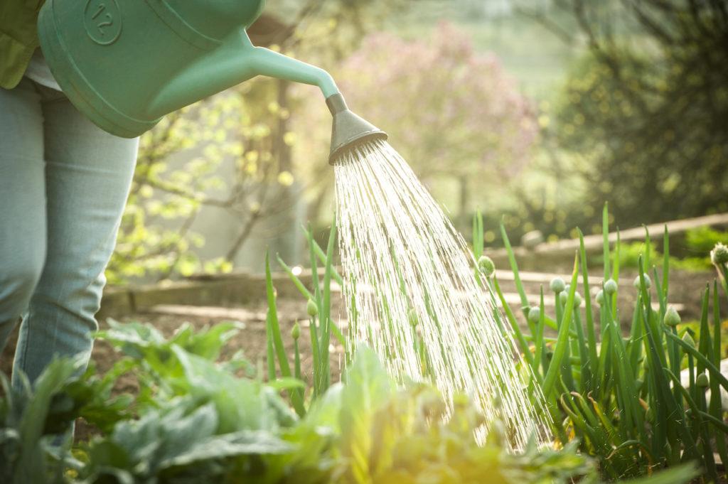 Gardening Photo Credit: as3d (iStock).