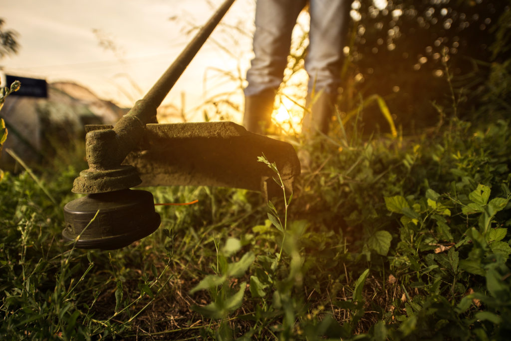 Trimmer Gardening Photo Credit: BraunS (iStock).