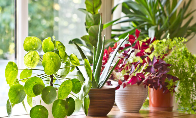 9 Easy Ways To Water Plants While on Vacation