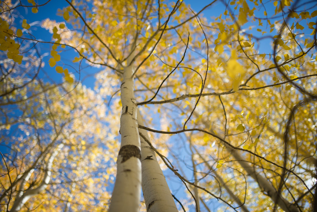 Colorado Photo Credit: HaizhanZheng (iStock).