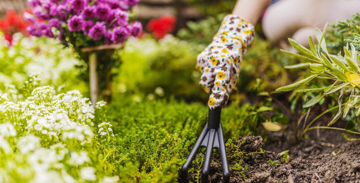 10 Gardening Tips for Beginners