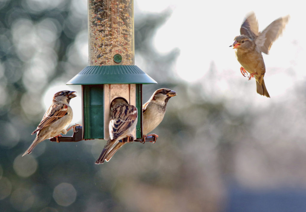 Bird Feeders Photo Credit: blightylad-infocus (iStock).