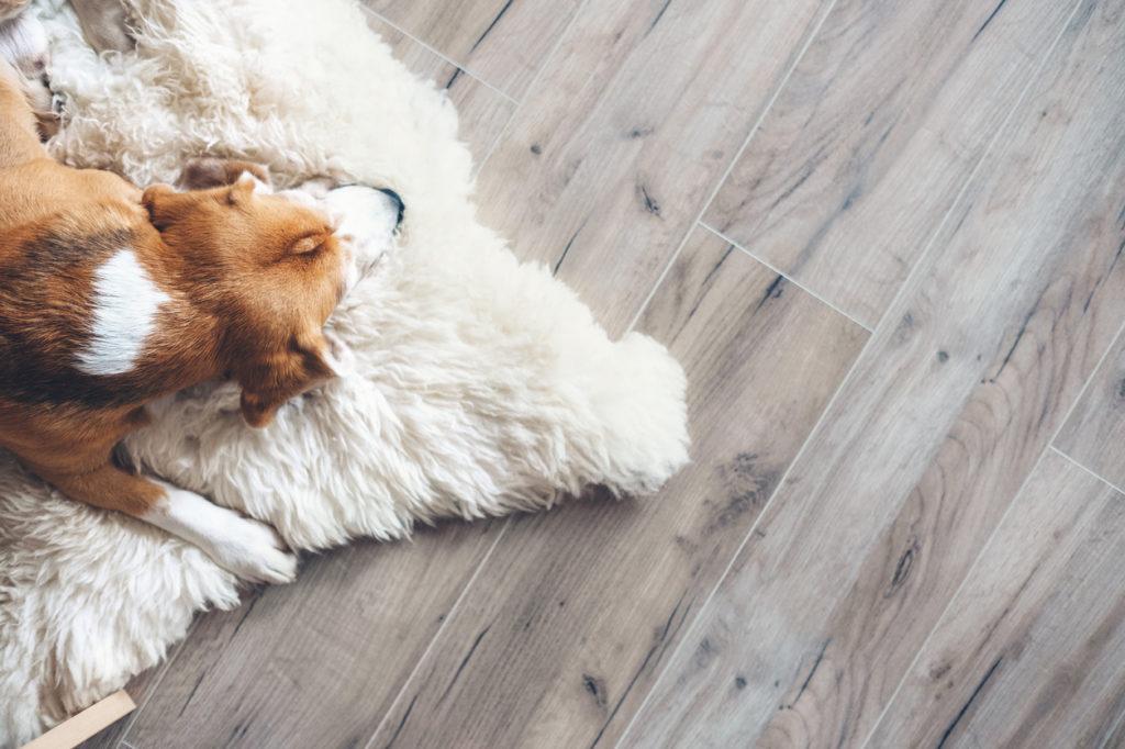 Dog Photo Credit: Solovyova (iStock).