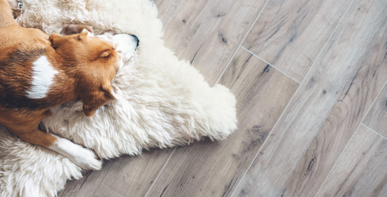 6 Household Items That are Dangerous for Pets