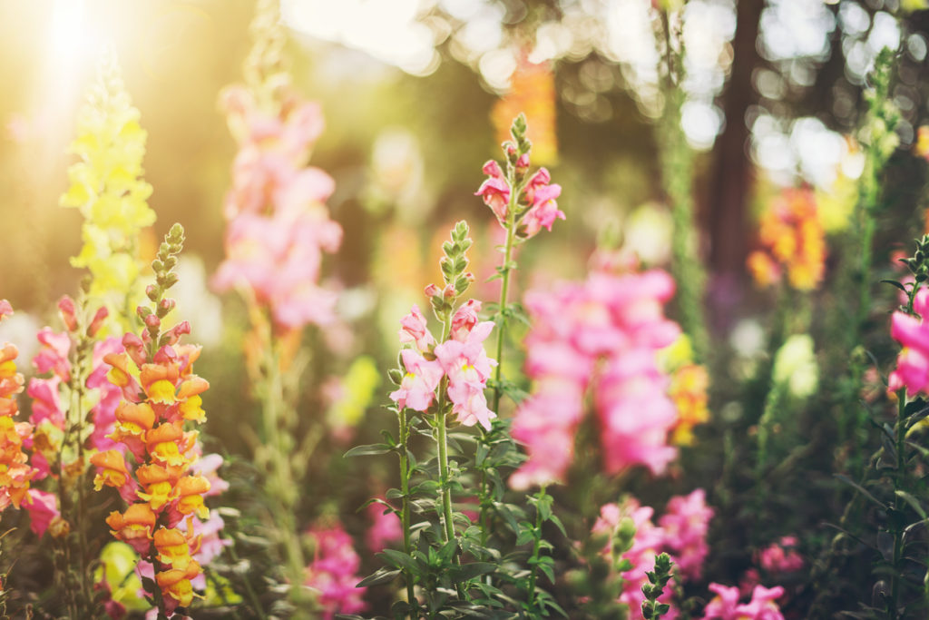 Flower Photo Credit: Xsandra (iStock).