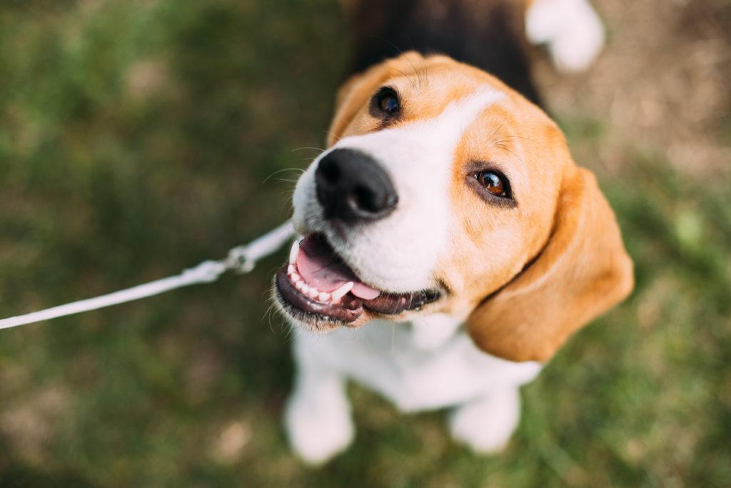 Dog Photo Credit: bruev (iStock).