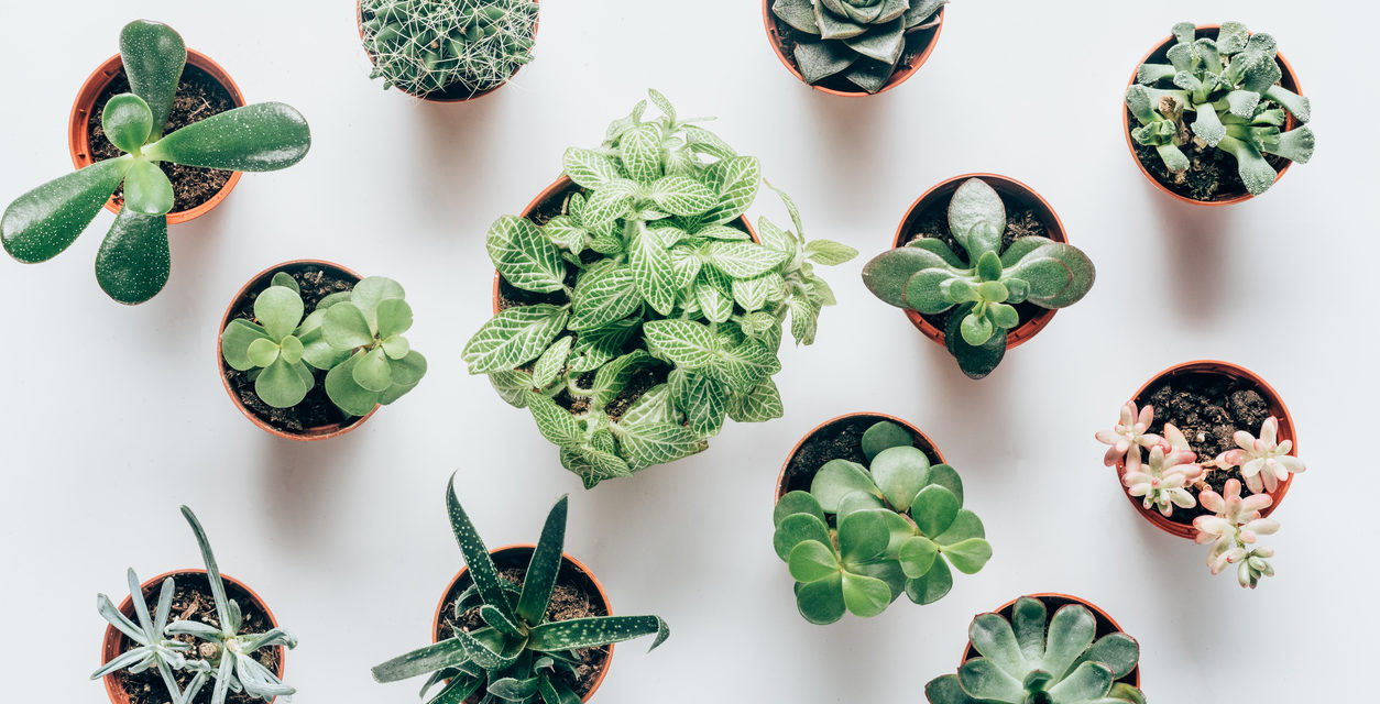5 Indoor Plants For Winter Gardening