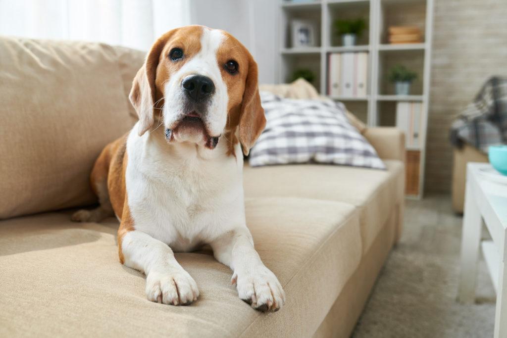 Puppy Photo Credit: SeventyFour (iStock).
