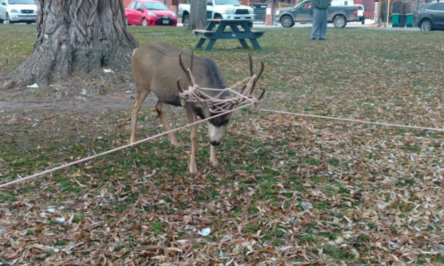 Holiday Decorations Pose Deadly Threat to Wildlife