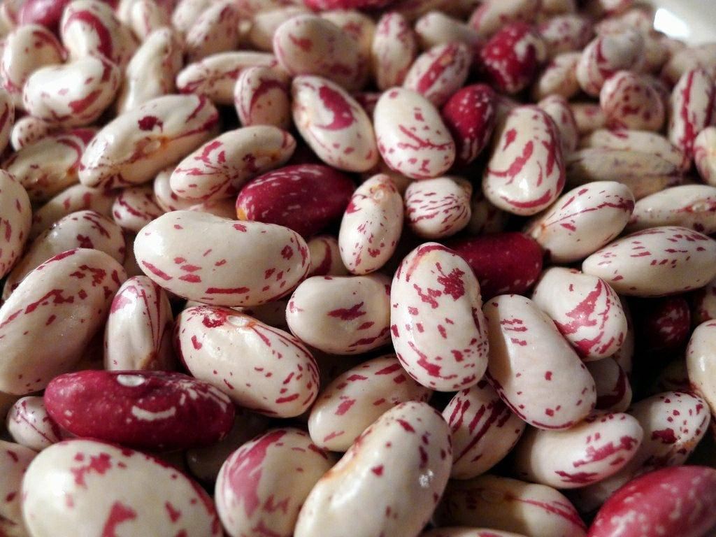 Beans Photo Credit: Lori L. Stalteri (Flickr).