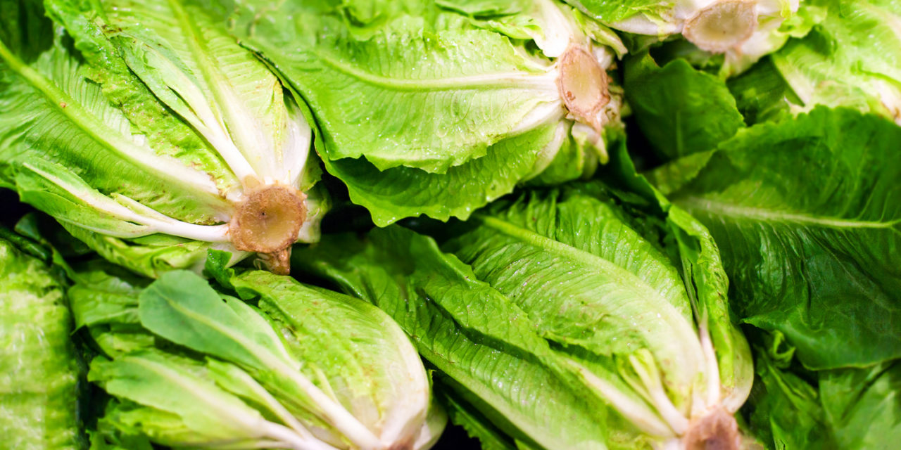 Food Poisoning Alert: Romaine Lettuce Unsafe to Eat