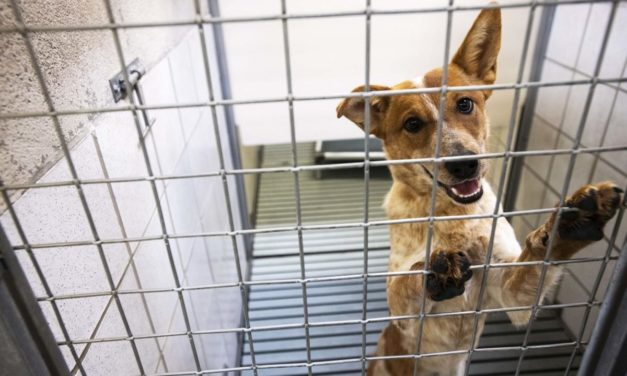 Humane Society's Hopes to Provide 1,000 Animals With Homes Over The Holidays
