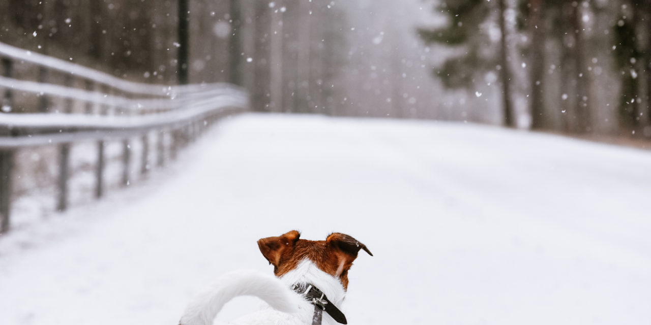5 Winter Safety Tips For Walking Dogs